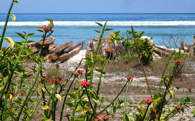 Hummingbird — Gili Trawangan Island, Indonesia
