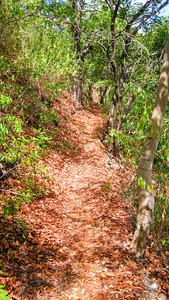 Leafy path — Gili Trawangan Island, Indonesia