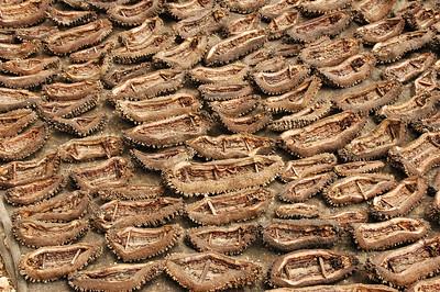 Kupang - drying tripang (sea cucumber)