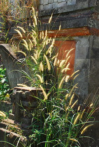 Grass near the back gate of abandoned 'Villa Bali' -6.632062 106.852624