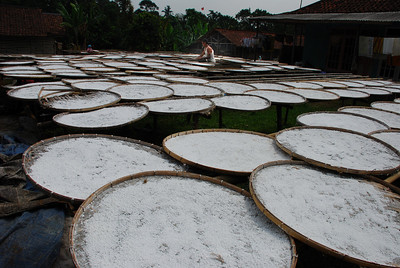 Traditional cassava processing (tapioca)