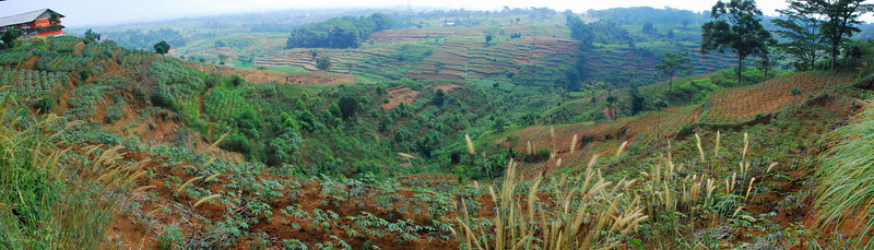 "Panoramic view of cassava and other crops (from ""Pink Chicken House Road"")"