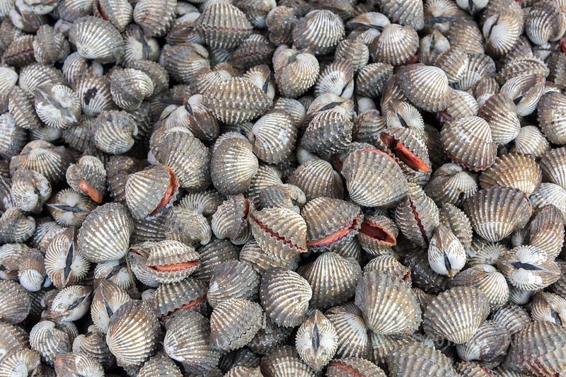 Blood cockles aka ark clam (Tegillarca granosa), Sunda Kelapa Pasar Ikah, Jakarta, Indonesia<br /> add keywords