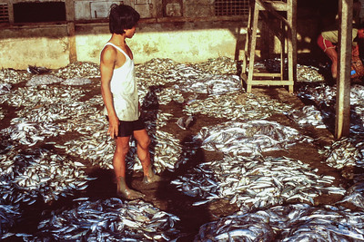 Boy with piles of fish at auction