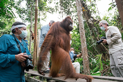 We had to have physical and a TB test before we could enter the orphanage as human diseases can kill the orangutans.  We had to wash out hands, wear a mask to protect them.