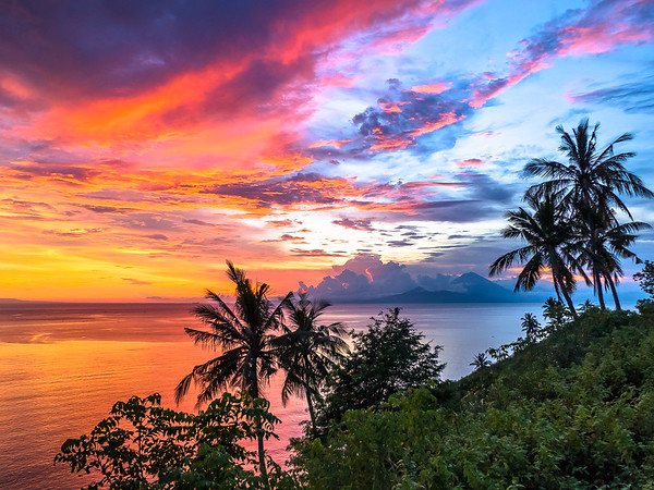 Fire Skies in the Jungle
