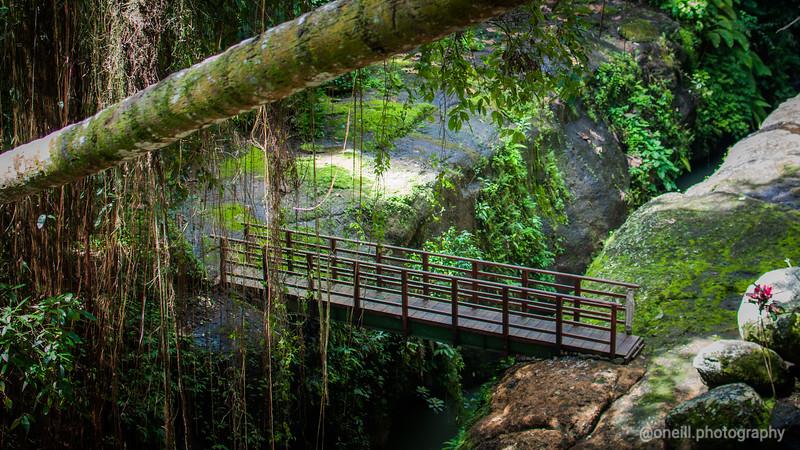 Rainforest Walking