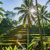 Jungle Terraces