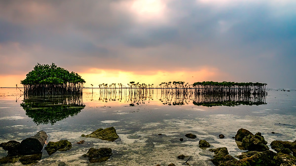 Thousand Island Mangrove Sunset