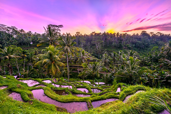 First Light over Rice Terraces