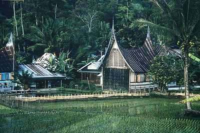House by rice paddy