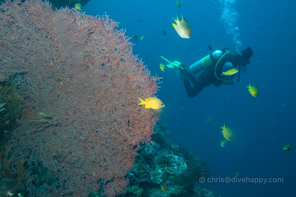 Corals at Menjangan Island, Bali