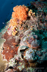 Diving Kalimantan, Indonesia