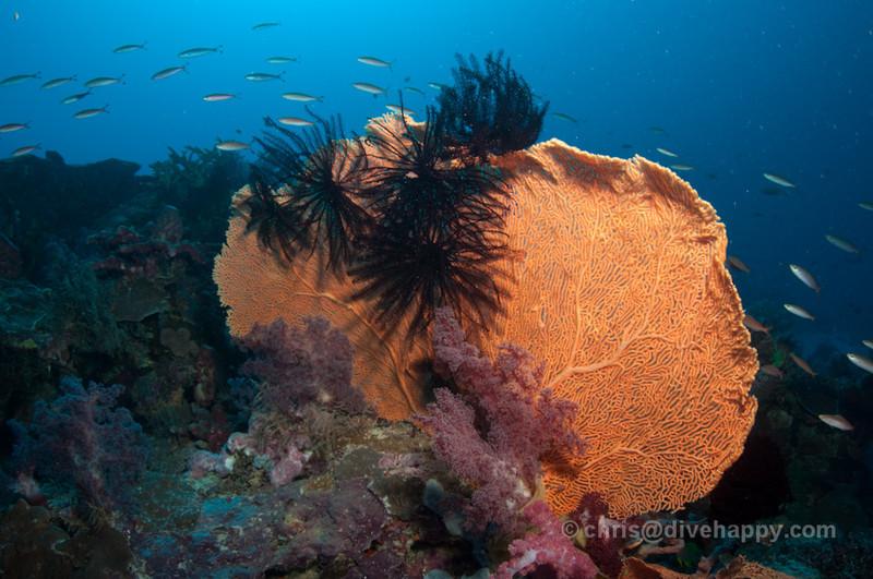 Diving Kalimantan, Indonesia