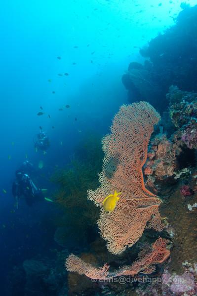 Divers approach a an coral at Menjangan