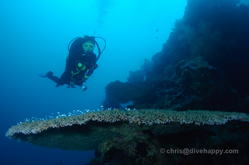 A diver passes over a massive table coral at Menjangan, Bali