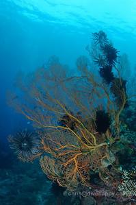 Coral at Menjangan