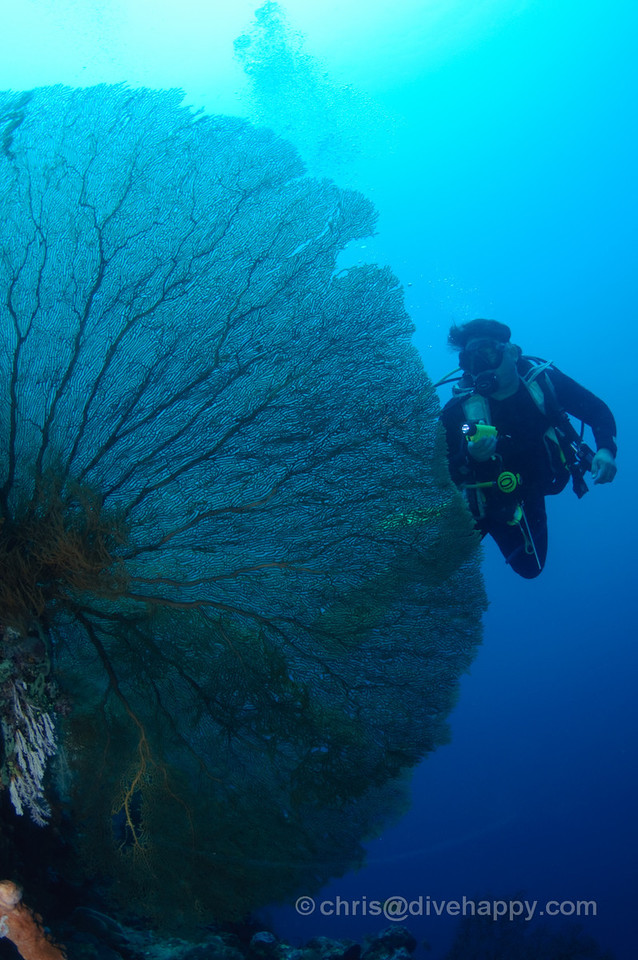 A diver emerges from behind a huge fan coral