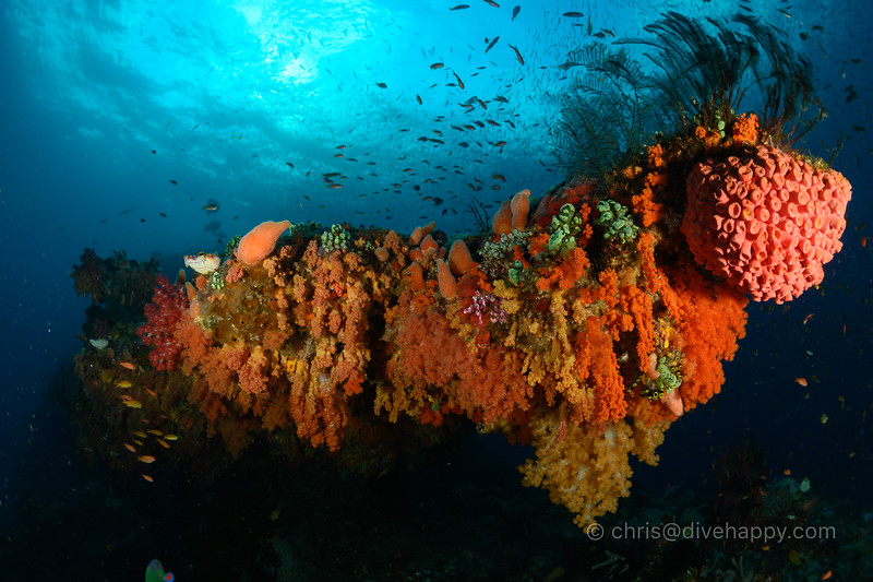 Soft coral overhang, Four Kings, Raja Ampat