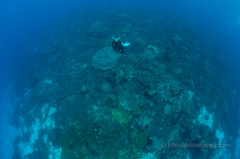 Diver over endless corals, Melissa's Garden, Raja Ampat