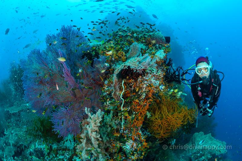 Diver with corals, Andiamo, Raja Ampat
