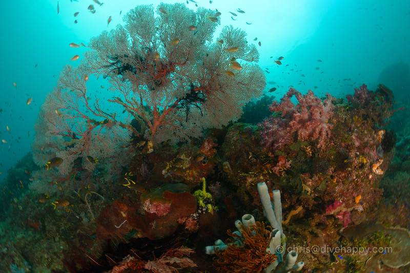 Reefscape, Three Sisters, Raja Ampat