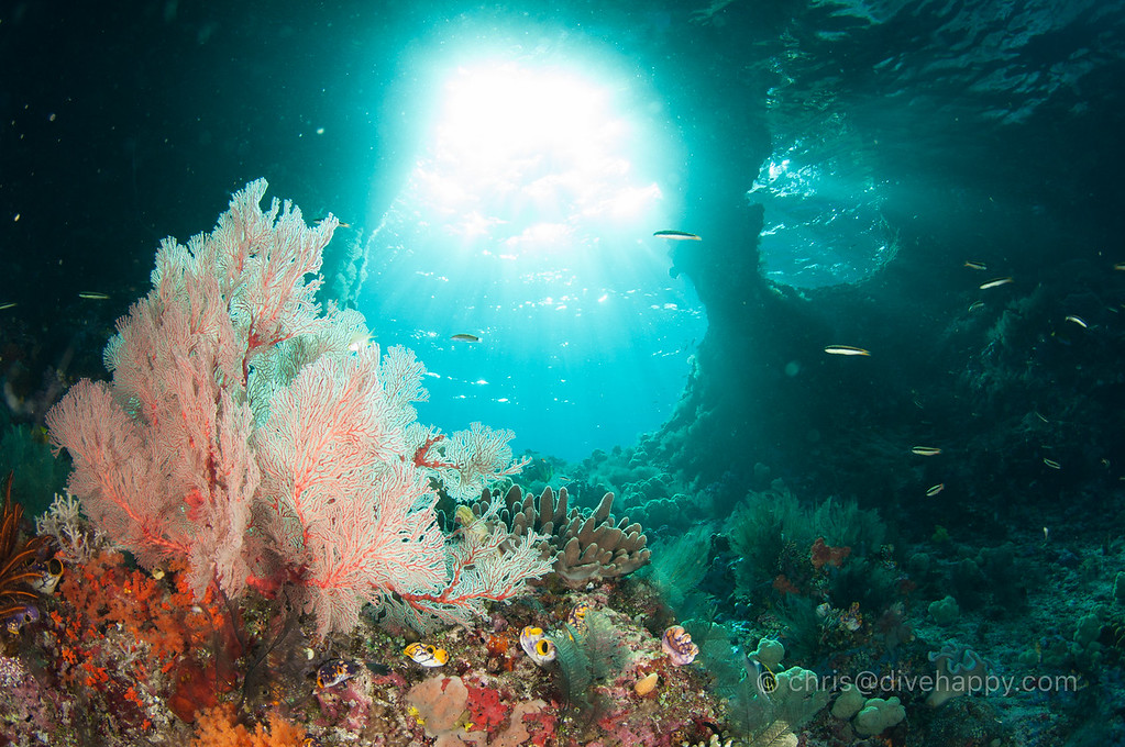 Boo Windows, Raja Ampat