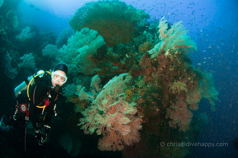 Diver and corals, Two Tree Island, Raja Ampat