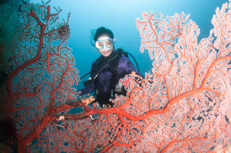 Hidy through the fan coral, Raja Ampat