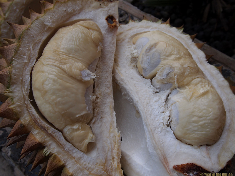 //www.yearofthedurian.com/2015/04/durian-sibadak-at-luwus-horticultura.html http://www.yearofthedurian.com/2015/04/durian-sibadak-at-luwus-horticultura.html