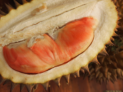 //www.yearofthedurian.com/2015/04/rainbow-durian-at-banyuwangi-frui.html