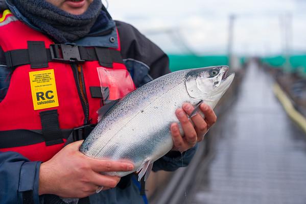 Salmon en manos