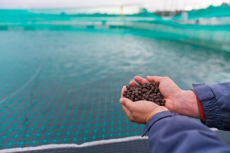 Alimento de salmon en manos