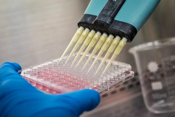 Laboratory research. Investigacion Cientifica
