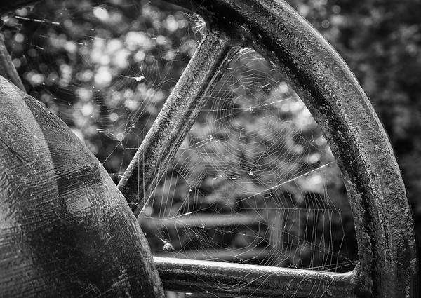 Old Wheel with Cobwebs - Pocklington Canal East Yorkshire UK 2013