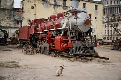 Train Dog