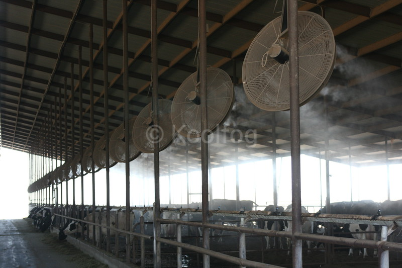 Dairy Fans in Loafing and Stanchion Areas