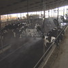 Moderating Dairy Environment
