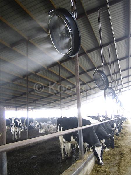 Koolfog Dairy Cooling
