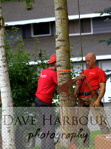 Greg Matthews and Terry Kennedy - Tall Trees by Dave Harbour