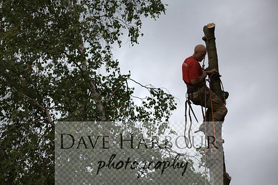Terry Kennedy - Tall Trees by Dave Harbour