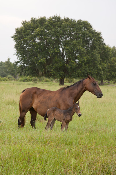 Mare and colt_SS7263
