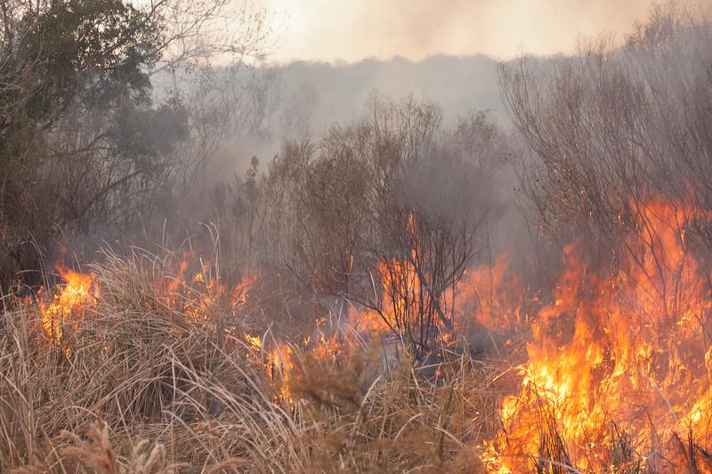 Field on Fire_SS10055