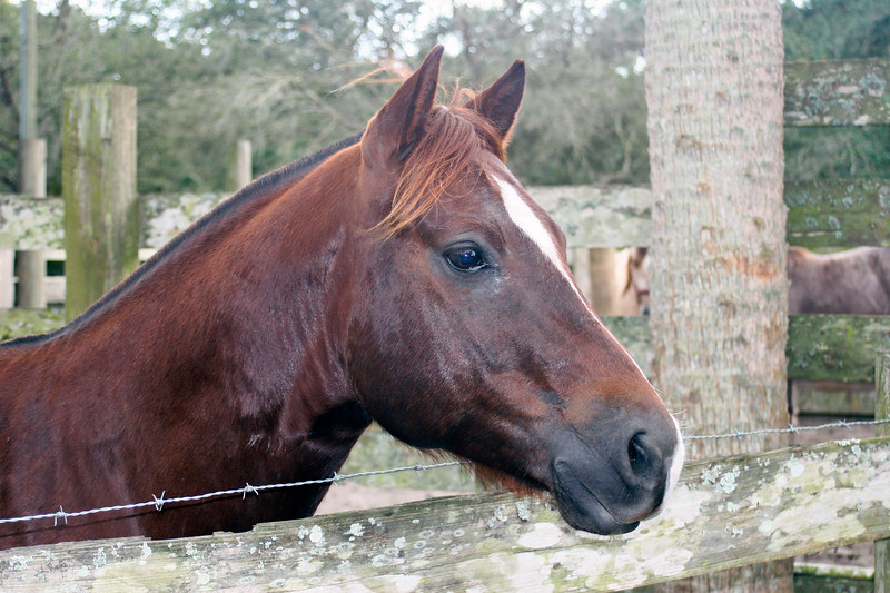 Horse in corral_SS9902