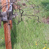Vintage Fencing_SS4979