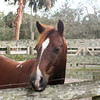 Horse in corral_SS9900