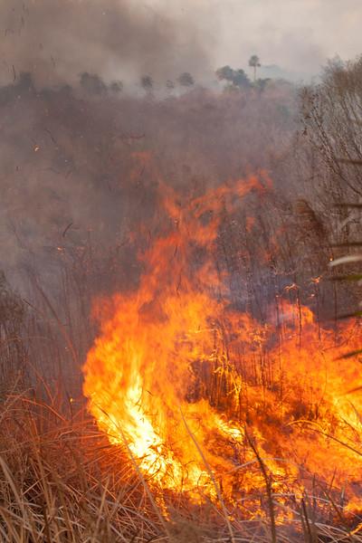 Field on Fire_SS10057
