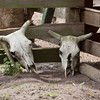 Cow Pens_SS6840