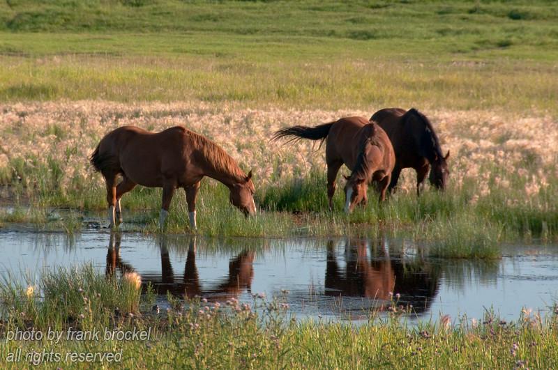 Horses enjoying a beautiful summer day