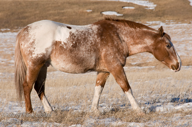 Horses in the Foothills of Alberta